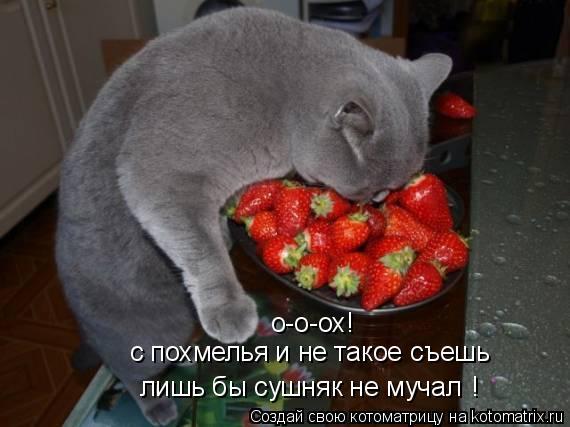 Котоматрица: о-о-ох! с похмелья и не такое съешь лишь бы сушняк не мучал !