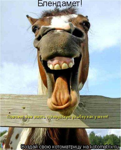 Котоматрица: Блендамет! Поможет вам иметь голивудскую улыбку как у меня!