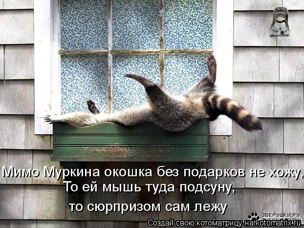 Котоматрица: Мимо Муркина окошка без подарков не хожу, То ей мышь туда подсуну, то сюрпризом сам лежу