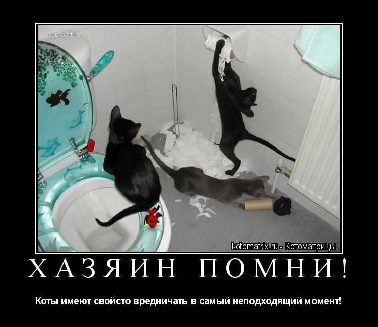 Котоматрица: Хазяин помни! Коты имеют свойсто вредничать в самый неподходящий момент!