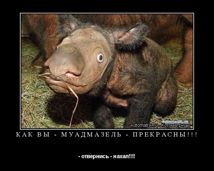 Котоматрица: Как Вы - муадмазель - прекрасны!!! - отвернись - нахал!!!!