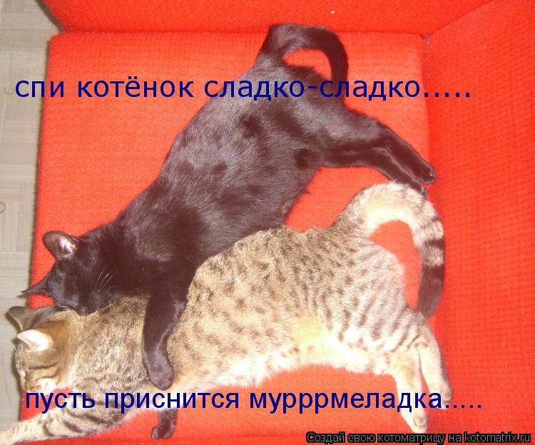 Котоматрица: спи котёнок сладко-сладко..... пусть приснится мурррмеладка.....