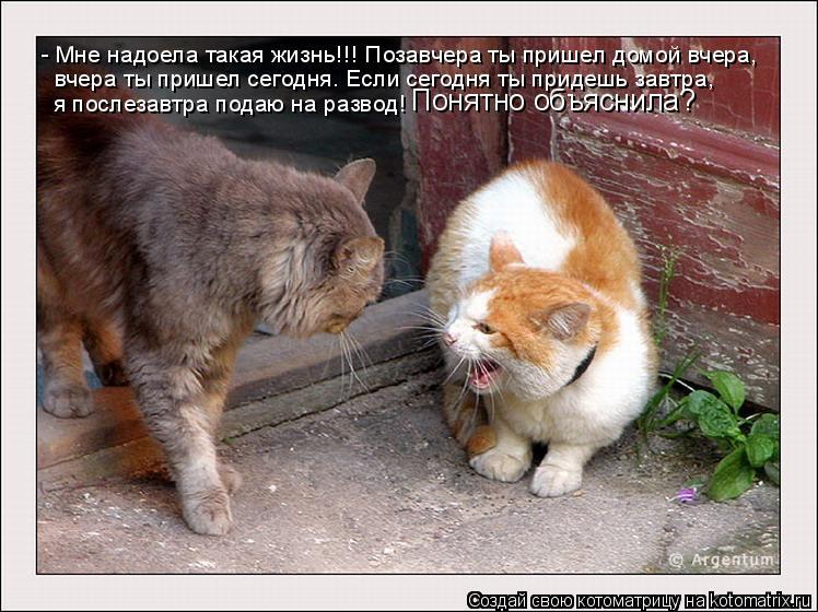 Котоматрица: - Мне надоела такая жизнь!!! Позавчера ты пришел домой вчера, вчера ты пришел сегодня. Если сегодня ты придешь завтра,  я послезавтра подаю на