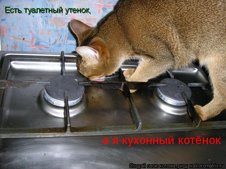 Котоматрица: Есть туалетный утенок, а я кухонный котёнок