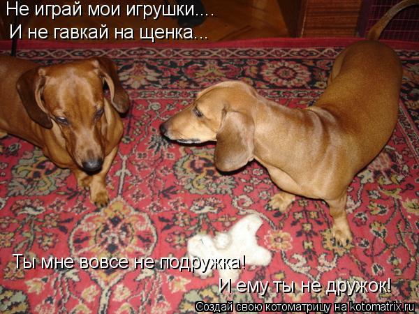 Котоматрица: Не играй мои игрушки.... Ты мне вовсе не подружка! И ему ты не дружок! И не гавкай на щенка...