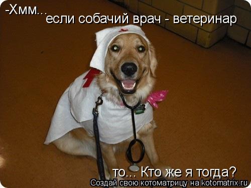 Котоматрица: -Хмм... если собачий врач - ветеринар то... Кто же я тогда?