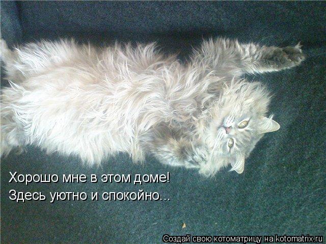 Котоматрица: Хорошо мне в этом доме! Здесь уютно и спокойно...