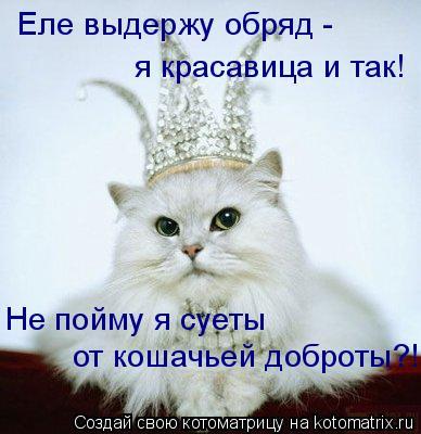 Котоматрица: Еле выдержу обряд - я красавица и так! Не пойму я суеты от кошачьей доброты?!