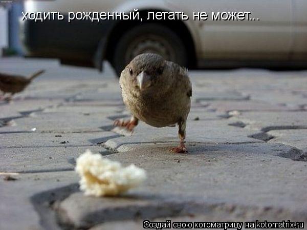 Котоматрица: ходить рожденный, летать не может...