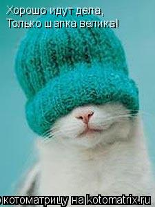 Котоматрица: Хорошо идут дела, Только шапка велика!