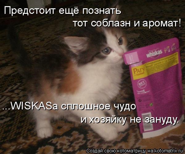 Котоматрица: Предстоит ещё познать  тот соблазн и аромат! ...WISKASа сплошное чудо и хозяйку не зануду.