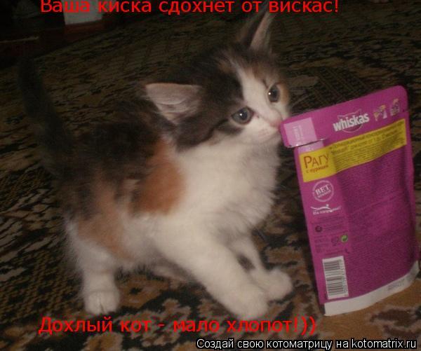 Котоматрица: Ваша киска сдохнет от вискас! Дохлый кот - мало хлопот!))