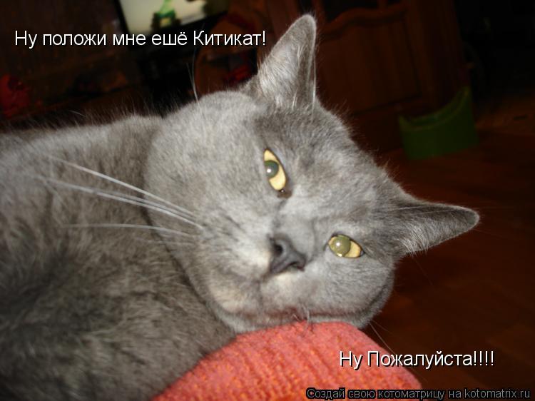 Котоматрица: Ну положи мне ешё Китикат! Ну Пожалуйста!!!!