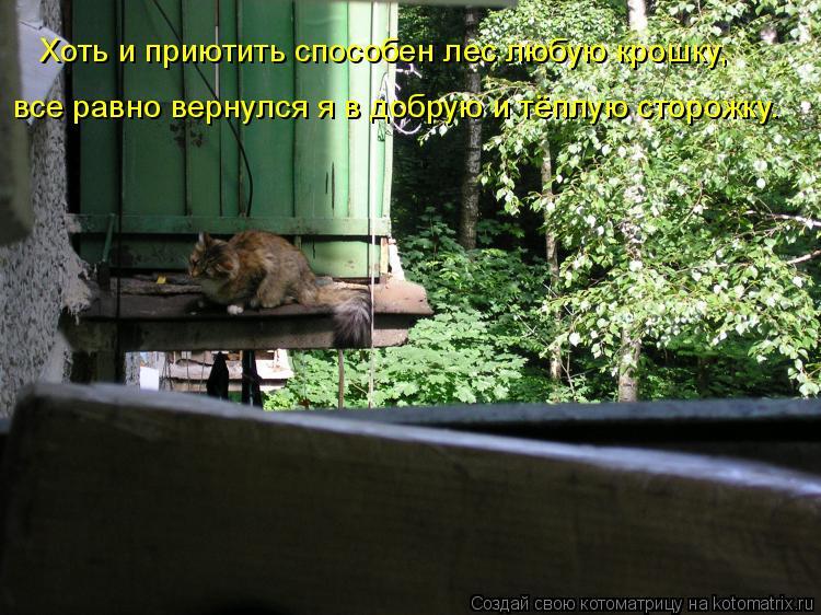 Котоматрица: Хоть и приютить способен лес любую крошку, все равно вернулся я в добрую и тёплую сторожку.