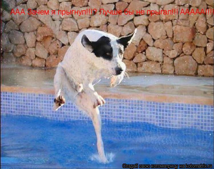 Котоматрица: ААА Зачем я прыгнул!!!? Лучше бы не прыгал!!! AAAAA!!!!