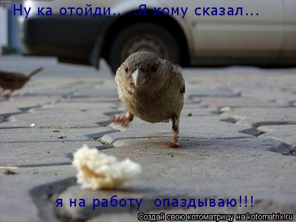 Котоматрица: Ну ка отойди.....Я кому сказал... Это мой обед упал из под крыла!! я на работу  опаздываю!!!