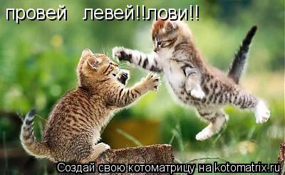Котоматрица: провей   левей!!лови!!