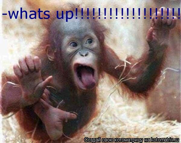 Котоматрица: -whats up!!!!!!!!!!!!!!!!!!!!!!