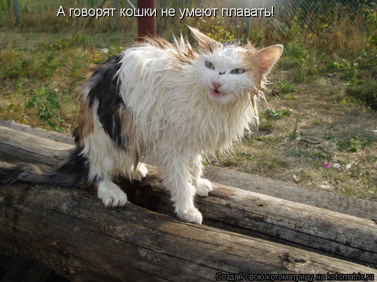 Котоматрица: А говорят кошки не умеют плавать!