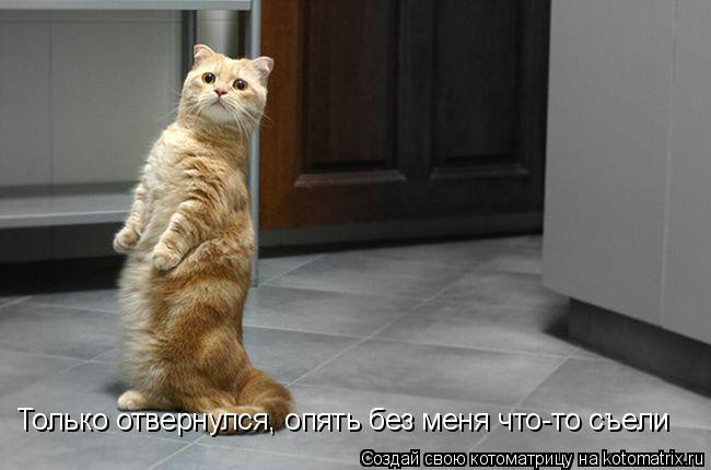 Котоматрица: Только отвернулся, опять без меня что-то съели