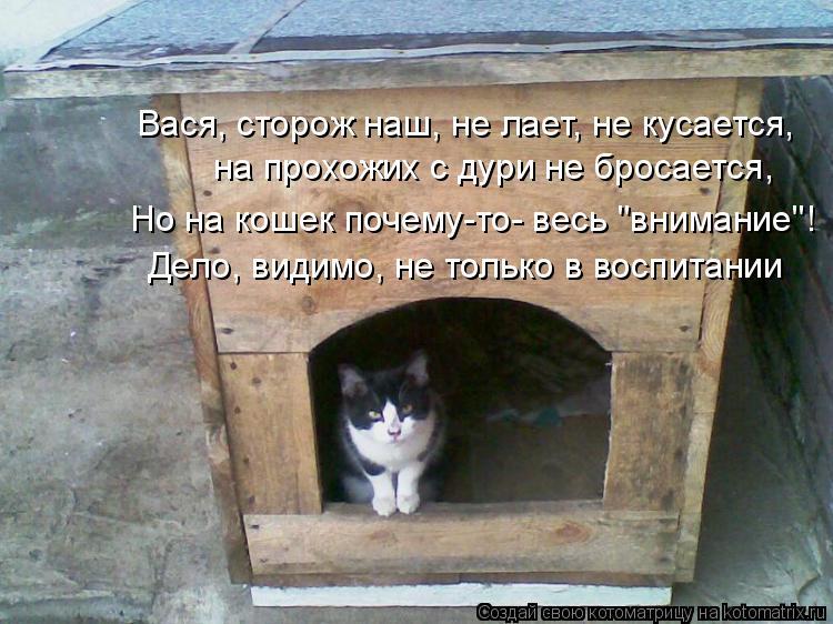 """Котоматрица: на прохожих с дури не бросается,  Дело, видимо, не только в воспитании Вася, сторож наш, не лает, не кусается, Но на кошек почему-то- весь """"внима"""