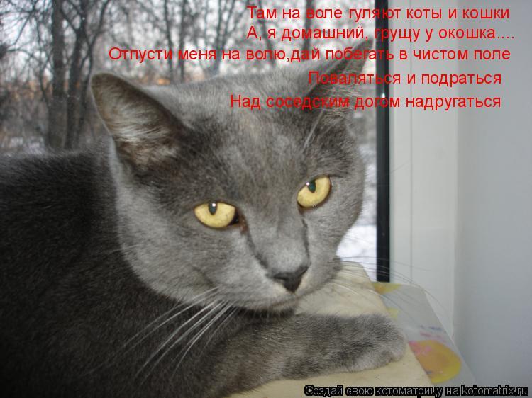 Котоматрица: Там на воле гуляют коты и кошки А, я домашний, грущу у окошка.... Отпусти меня на волю,дай побегать в чистом поле Поваляться и подраться Над со