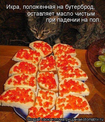 Котоматрица: Икра, положенная на бутерброд, оставляет масло чистым при падении на пол.