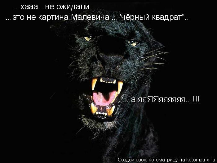 """Котоматрица: ...хааа...не ожидали.... ...это не картина Малевича....""""чёрный квадрат""""... ....а яяЯЯяяяяяя...!!!"""