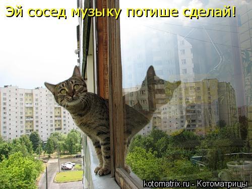 Котоматрица: Эй сосед музыку потише сделай!
