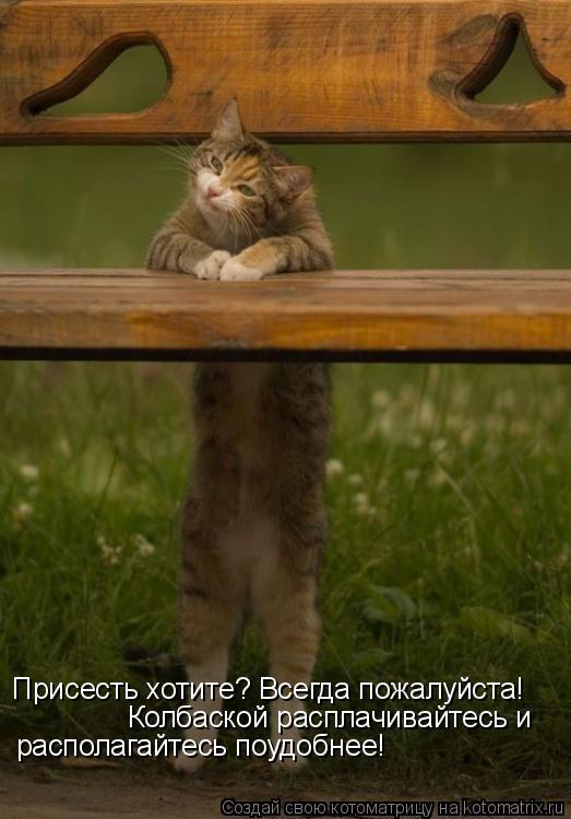 Котоматрица: Присесть хотите? Всегда пожалуйста! Колбаской расплачивайтесь и  располагайтесь поудобнее!