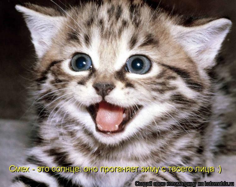 Котоматрица: Смех - это солнце: оно проганяет зиму с твоего лица :)