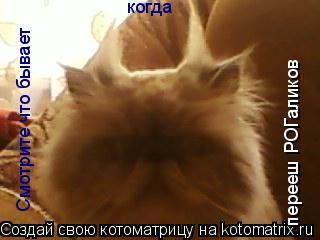 Котоматрица: Смотрите что бывает  когда  перееш РОГаликов