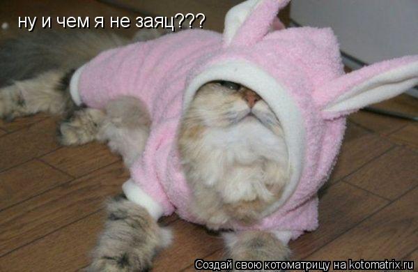Котоматрица: ну и чем я не заяц???