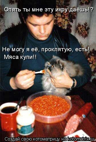 Котоматрица: Опять ты мне эту икру даёшь!?  Не могу я её, проклятую, есть! Мяса купи!! Мяса купи!!