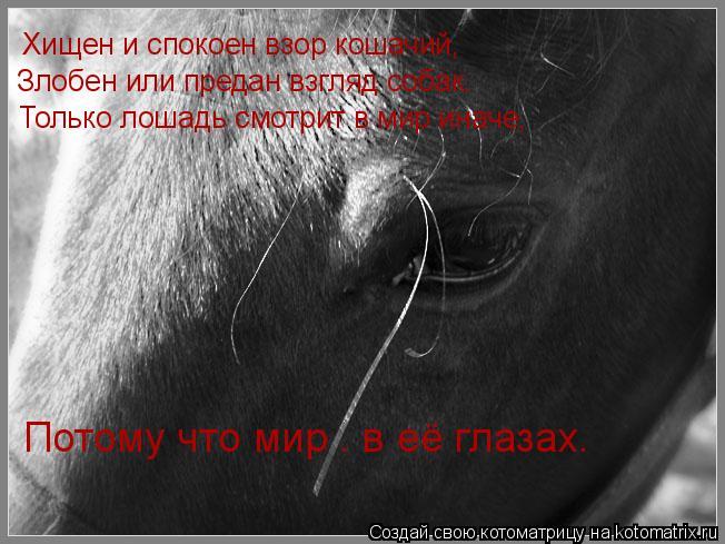 Котоматрица: Хищен и спокоен взор кошачий, Злобен или предан взгляд собак. Только лошадь смотрит в мир иначе, Потому что мир – в её глазах.