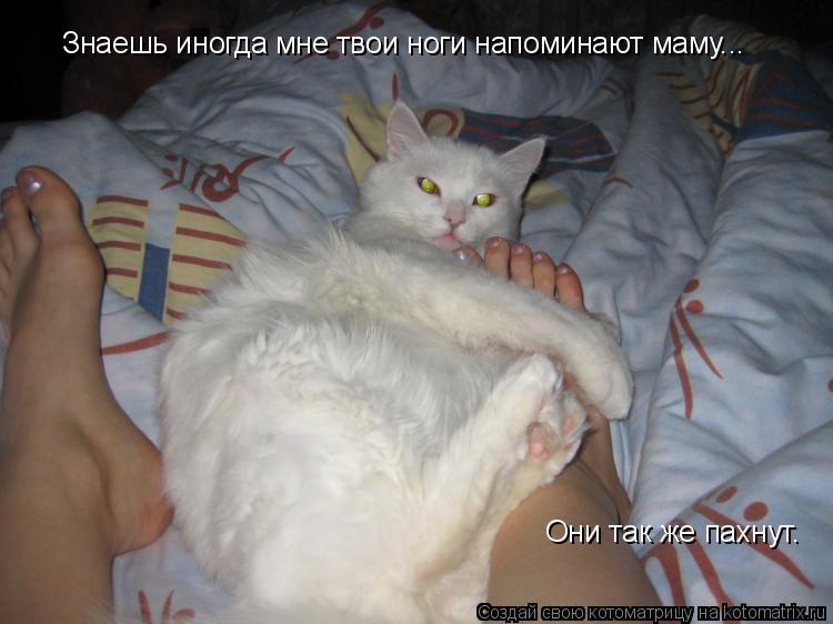 Котоматрица: Знаешь иногда мне твои ноги напоминают маму... Они так же пахнут.