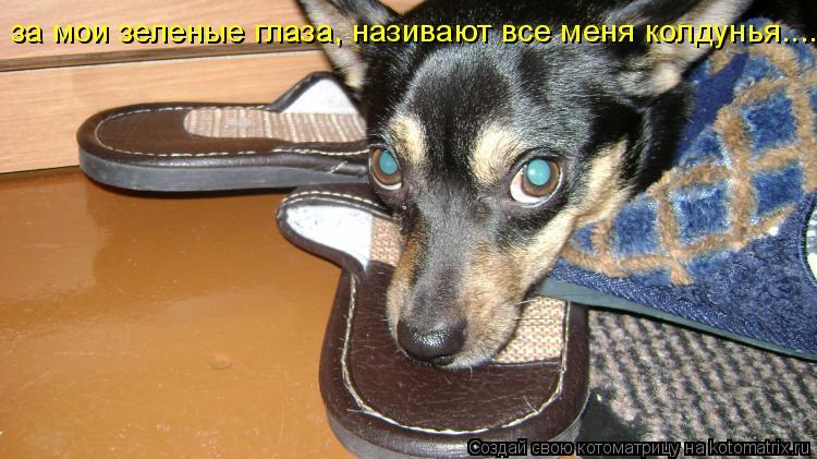Котоматрица: за мои зеленые глаза, називают все меня колдунья..........