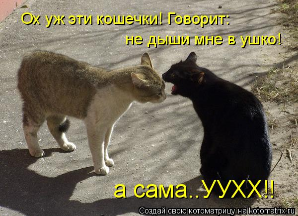 Котоматрица: Ох уж эти кошечки! Говорит:  не дыши мне в ушко! а сама..УУХХ!!