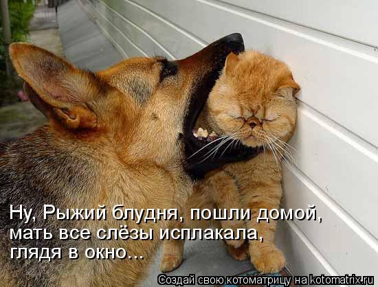 Котоматрица: Ну, Рыжий блудня, пошли домой, мать все слёзы исплакала, глядя в окно...