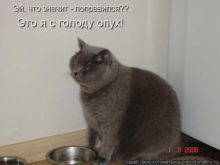 Котоматрица: Эй, что значит - поправился?? Это я с голоду опух!