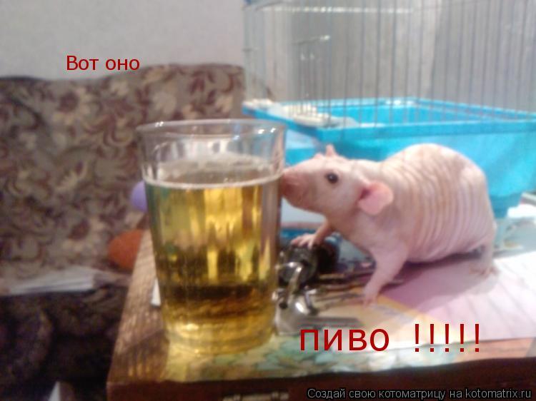 Котоматрица: Вот оно     пиво    !!!!!