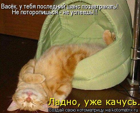 Котоматрица: Васёк, у тебя последний шанс позавтракать! Не поторопишься - не успеешь!!! Ладно, уже качусь.