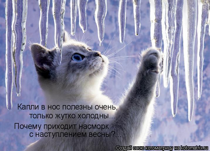 Котоматрица: Капли в нос полезны очень, только жутко холодны... Почему приходит насморк с наступлением весны?...