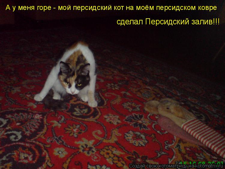 Котоматрица: А у меня горе - мой персидский кот на моём персидском ковре  сделал Персидский залив!!!