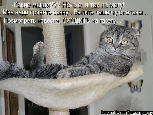 Котоматрица: -Какие мыши??? Не-е-е, я так не могу! Мне надо принять ванну...Выпить чашечку сметаны... Посмотреть новости, СХОДИТЬ на газету...