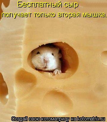Котоматрица: Бесплатный сыр  получает только вторая мышка...
