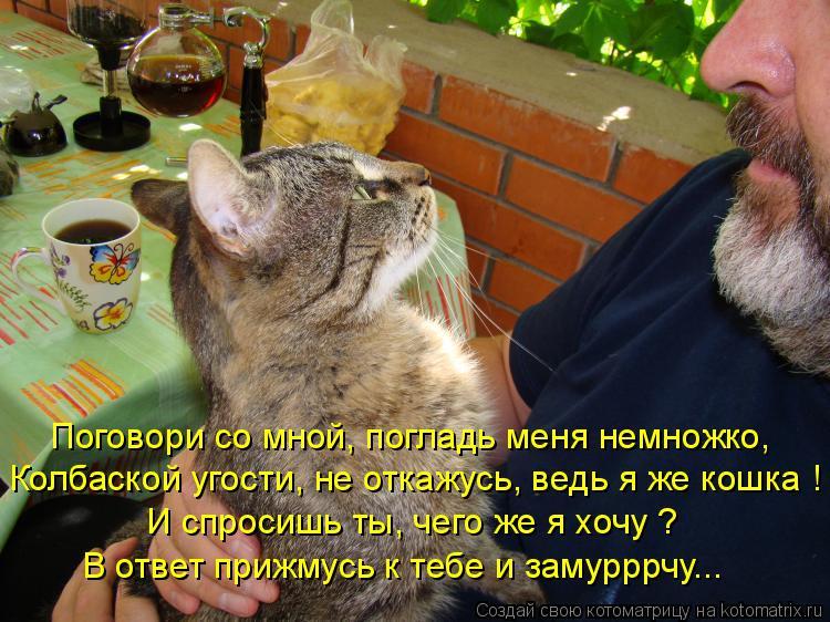 Котоматрица: Поговори со мной, погладь меня немножко, Колбаской угости, не откажусь, ведь я же кошка ! И спросишь ты, чего же я хочу ? В ответ прижмусь к теб