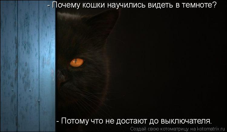 Котоматрица: - Почему кошки научились видеть в темноте?   - Потому что не достают до выключателя.