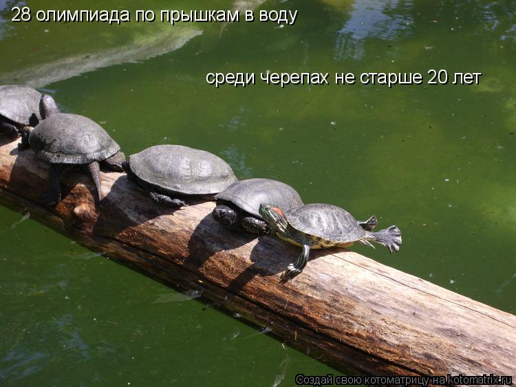 Котоматрица: 28 олимпиада по прышкам в воду  среди черепах не старше 20 лет