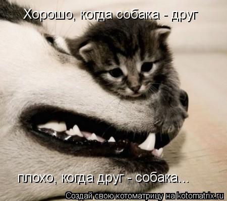 Котоматрица: Хорошо, когда собака - друг плохо, когда друг - собака...